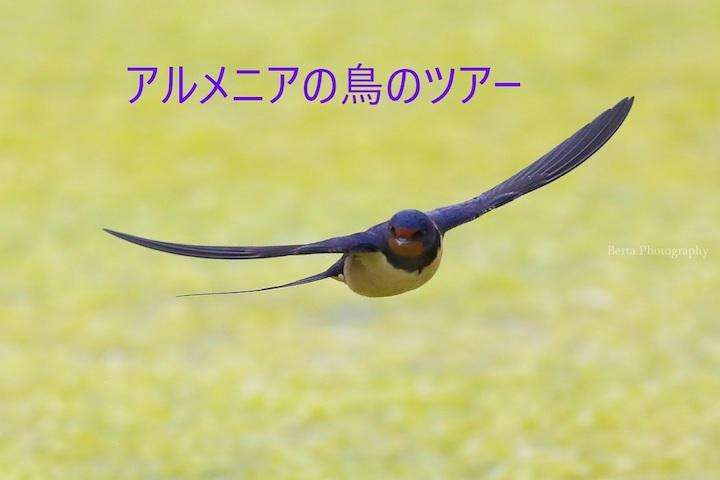 アルメニアの鳥
